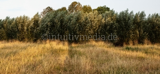 Bäume im Sommer - Wilde Natur