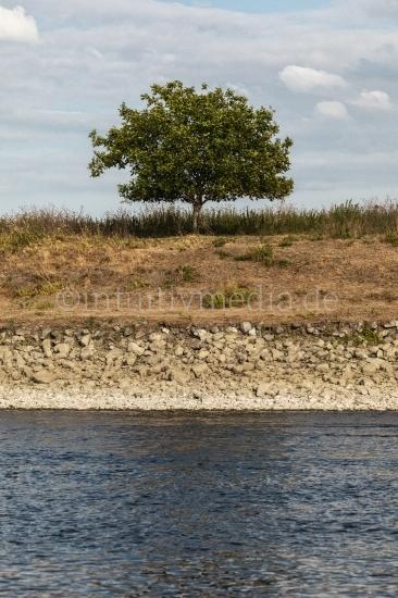 Baum am Maas Ufer