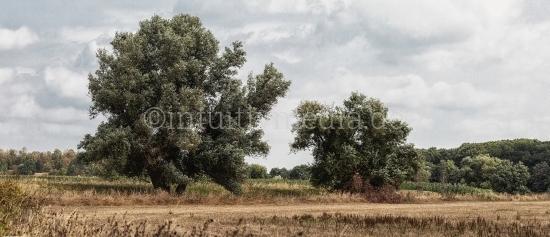 Weiden Landschaft