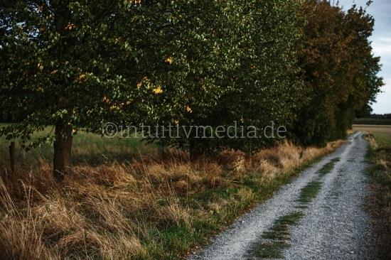 Baum mit Feldweg