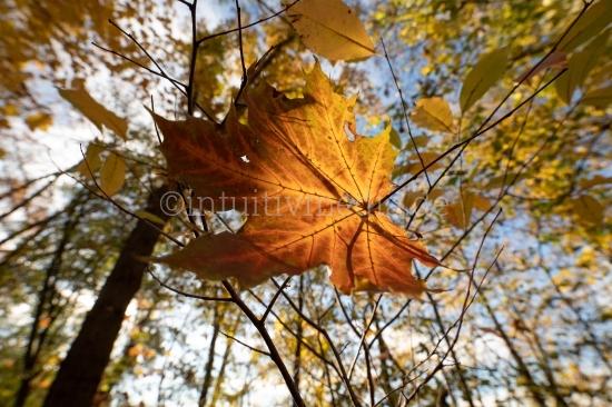 Herbstfarben im Wald
