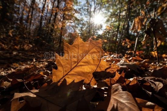 Waldboden Herbstfarben