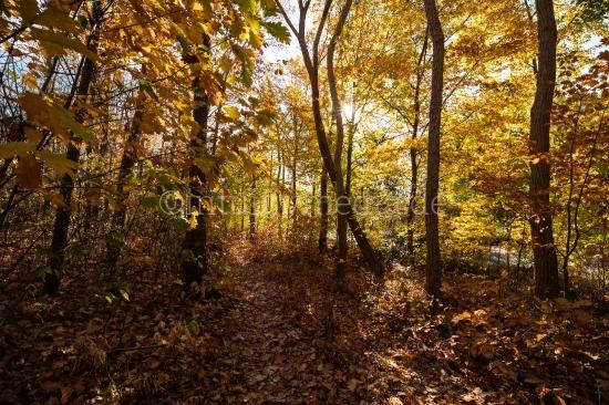Wald Herbstfarben