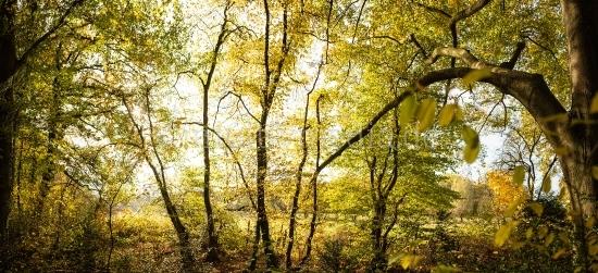 Naturbilder im Herbst