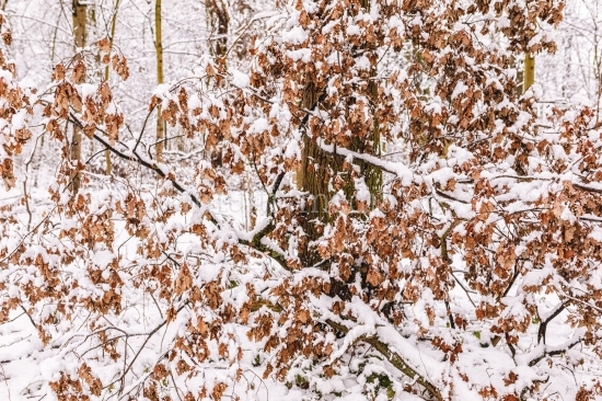 Winter Landschaft - Schnee & Frost