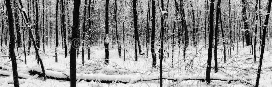 Stämme im Schnee