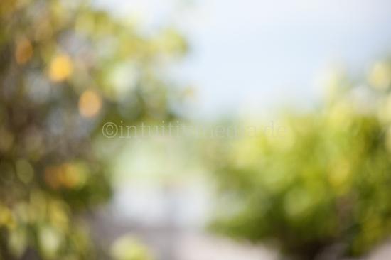 Natur Hintergrund unscharffür Portraits