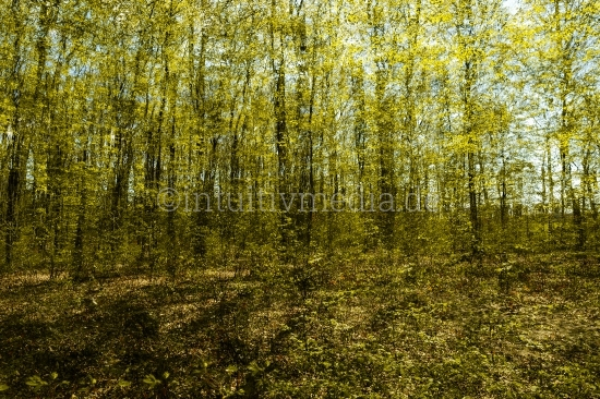 Wald im Frühling - Laub und Leben