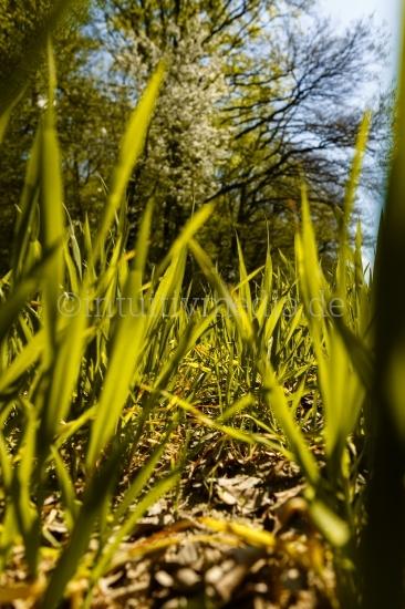 Grünes Gras im Gegenlicht