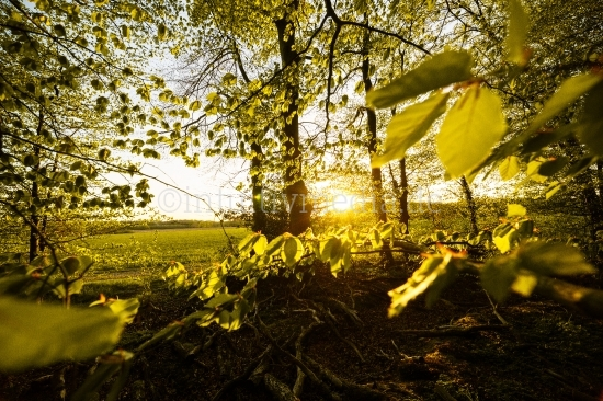 Landschaftsfotos - Natur im Frühling