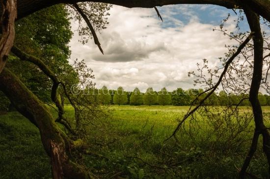 Schöne Wald Bilder im Frühling