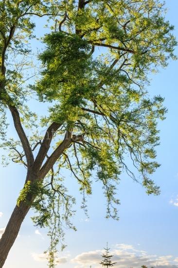 Bäume mit Landschaft