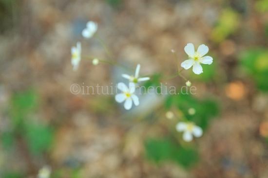 Blühende Natur Stimmungsbilder Wachstum