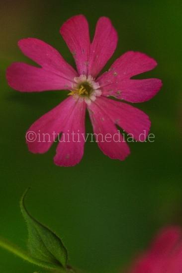 Schöne Blumenbilder in Nahaufnahme