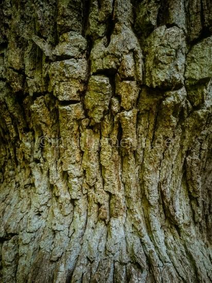 Baumrinde Closeup Eichenrinde