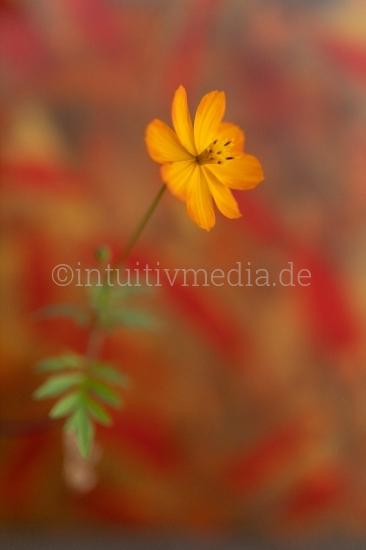 Blüten Closeup - Flower