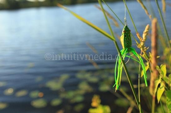 Bilder zum Thema Angeln - Frog Angelköder