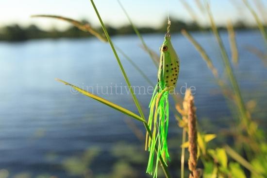 Frog Angelköder Bilder zum Thema Angeln