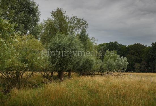 Sommer Landschaft mit Weiden