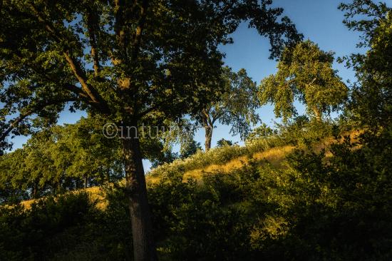 Bäume im Sommer