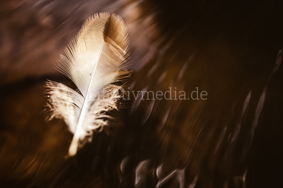 Feather on surface of water