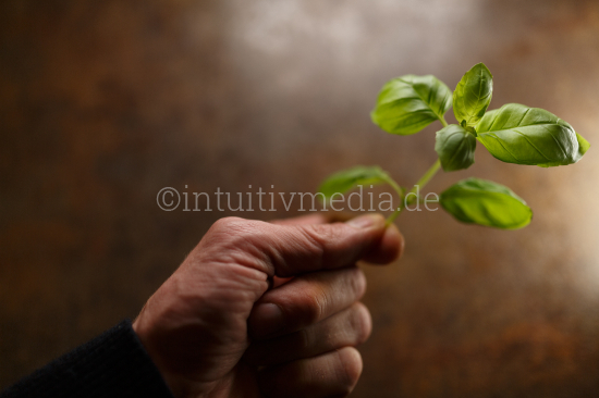 Hand holding green plant in the light