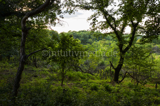 Countryside with Trees