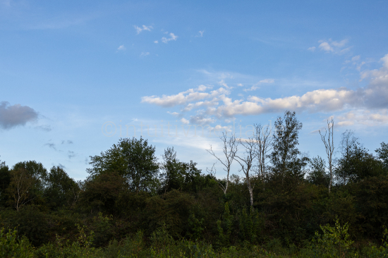 Countryside with trees and sky