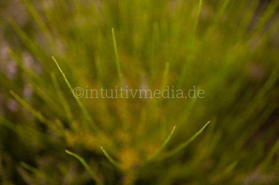 Green plant closeup