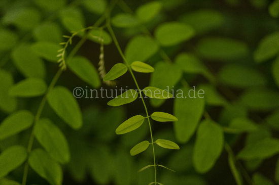 Green plant with leafs
