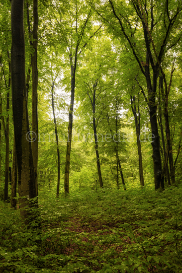 Green forest and trees