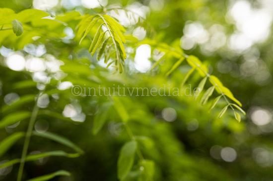 Grüne Zweige mit unschärfe