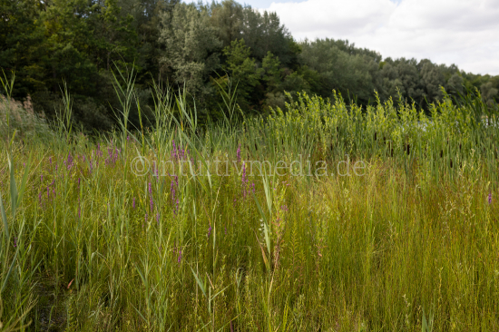 Green plants at a lac