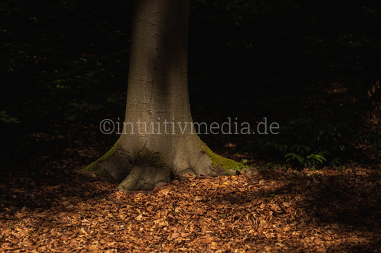 Tree trunk in the shadow