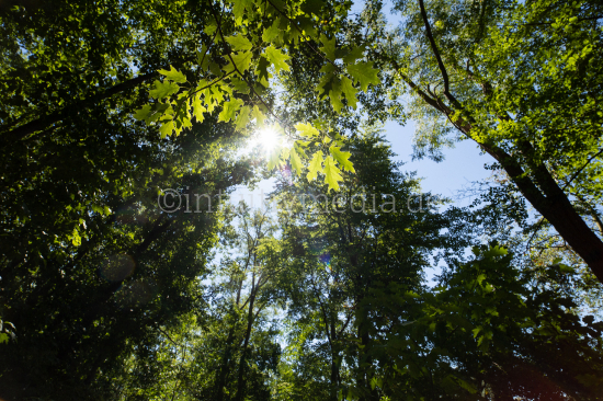 Trees with green foliage in forest