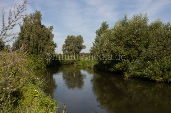River ruhr water and trees
