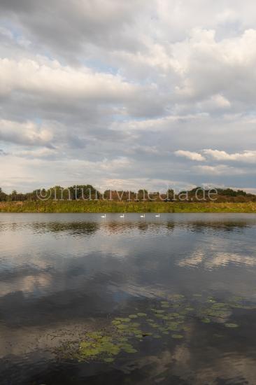 River maas landscape