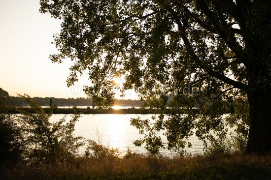 River Maas countryside