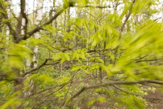 Bewegter Frühling - spring in motion