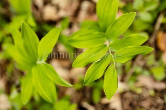 Grüne Frühlings Natur
