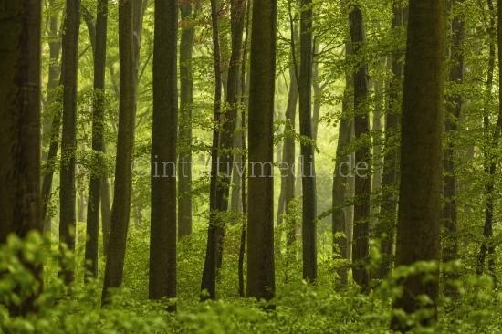 Grüner Wald mit Baumstämen