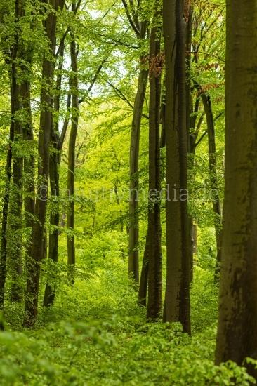 Schöner Wald nach dem Regen