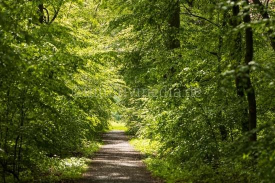 Waldweg mit Sonne
