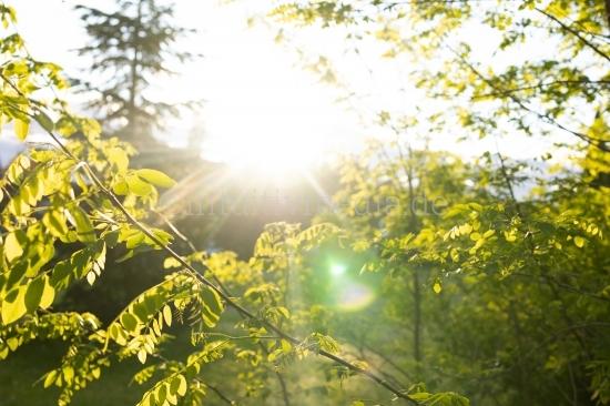 Sonnenlicht in grünen Zweigen
