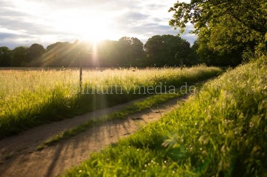 Sonnenstrahlen in der Natur