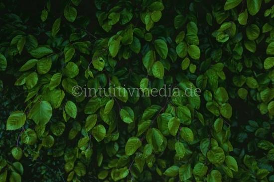 Blätter wand