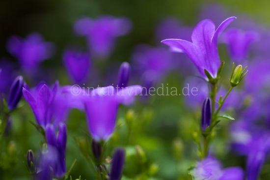 Blüten mit Unschärfe