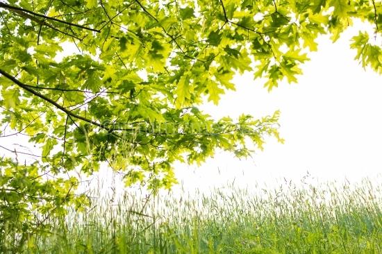 Frühling inder Natur
