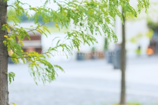 Blurred Background green abstract