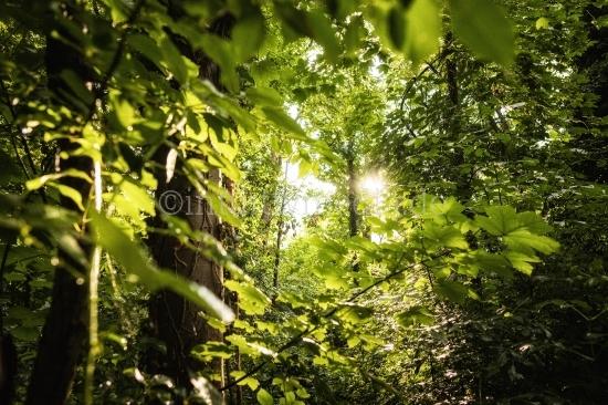 Regen im Wald im Gegenlicht